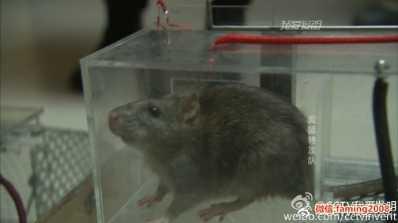 2017隐形捕鼠器发明人冯晓明 我爱发明捕鼠器