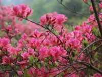 春天开的花有哪些 春天开的花朵有哪些
